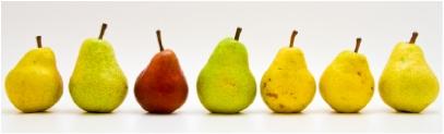 Pears_lrg