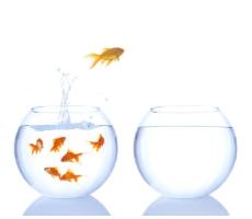Fishbowl_med