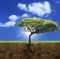 Tree_lrg